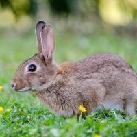 家庭的で傷つきやすい「ウサギ顔」